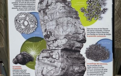 Plant life in the bare rock