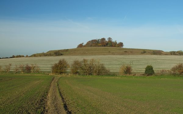 Looking towards the earthworks on Castle Hill from near Brightwell Barrow