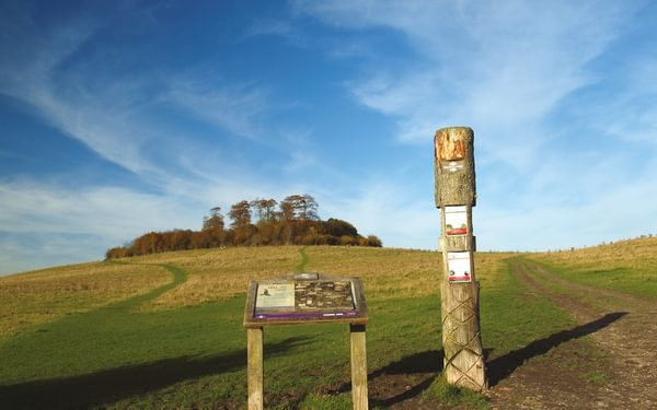 The twin tops of the Wittenham Clumps are crowned by beech trees