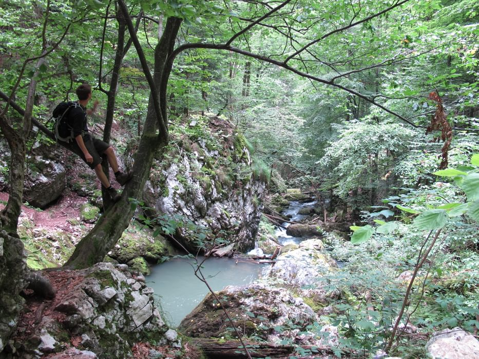 Cheile Galbenei was carved by the river emerging from the Cetatile Ponorului downstream sump