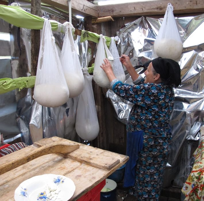 Traditional cheese making: curds draining in muslin bags