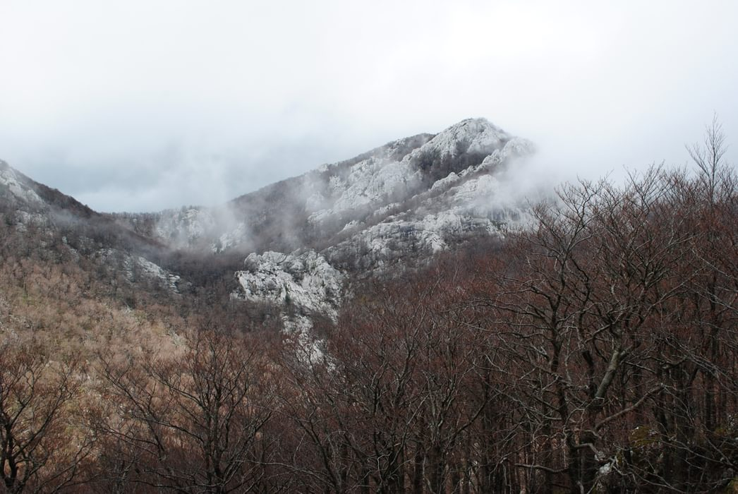 A Misty Day Three In Middle Velebit