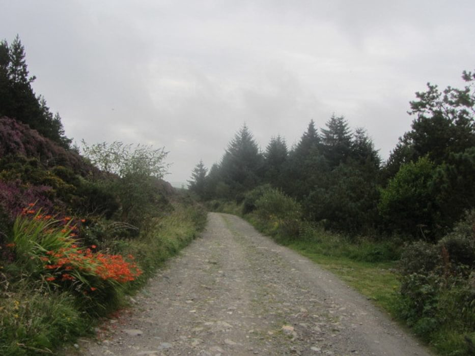 Track Through Corlea Plantation Walk 3