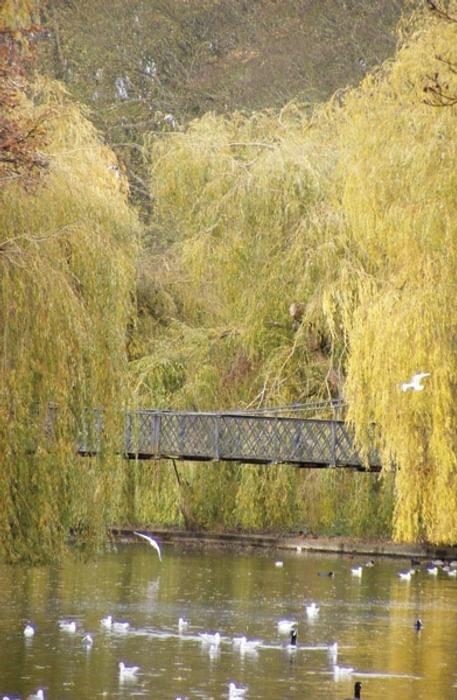 Wardown Park bridge near Luton