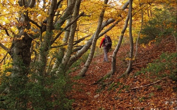 The pleasures of autumn walking in Provence