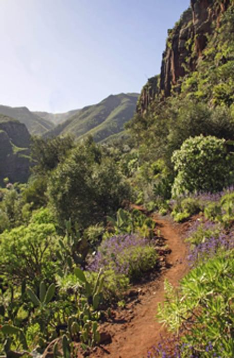 Flowery Traverse Walking In Gran Canaria