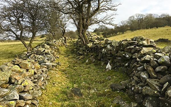 An Ancient Track Between Fields In Cumbria