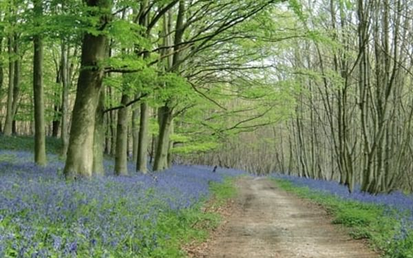 A journey along the North Downs Way is a truly memorable experience