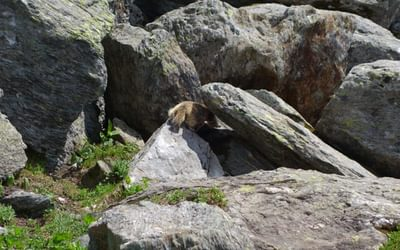 Fat little marmot number 2