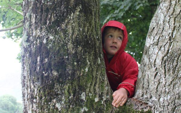 Lake District tree climbing