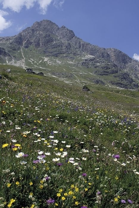 Gorgeous Alpine flowers along the route