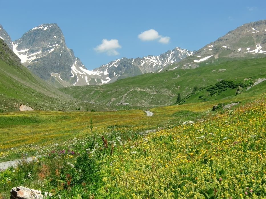 Flower-filled meadows of Val Tuoi