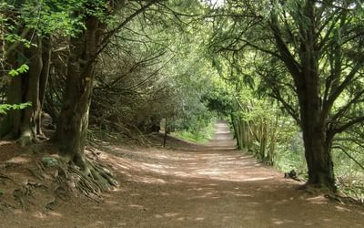 North Downs Way Trosley Country Park