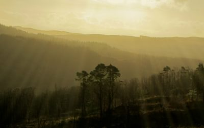 12 Morning Light In Grizedale Forest