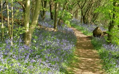 Many Walks Lead Through Bluebell Woods