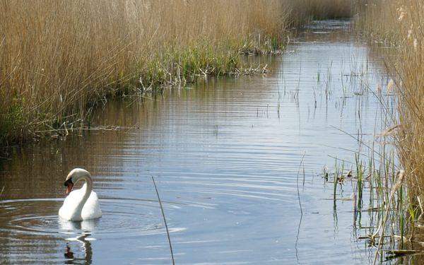 Stodmarsh Nature Reserve Makes For Interesting Walks Among The Reedbeds