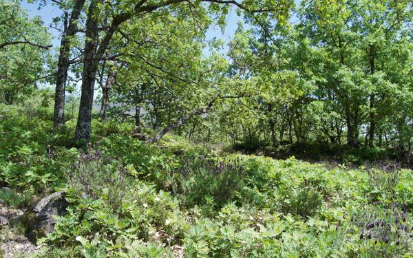 7  The Deciduous Oak Wood