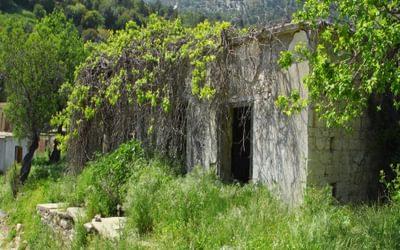 Vegetation Had Taken Over The Building