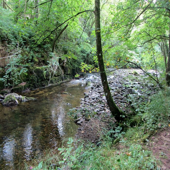 River Caldew In Dentonside Wood