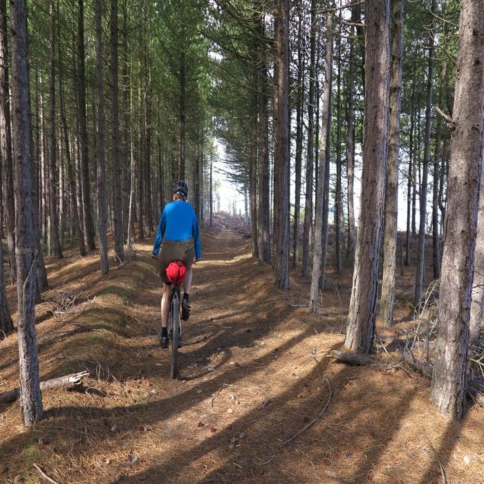 Cycling through the pine woods