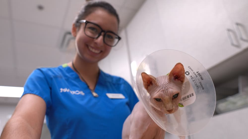 vet nurse smiles with cat and cone