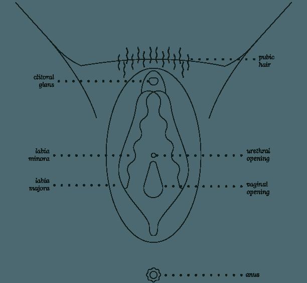Viva La Vulva Coloring Sheet