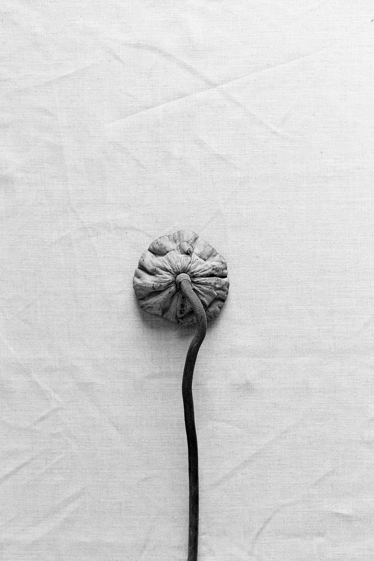 Lotus Pod Single
