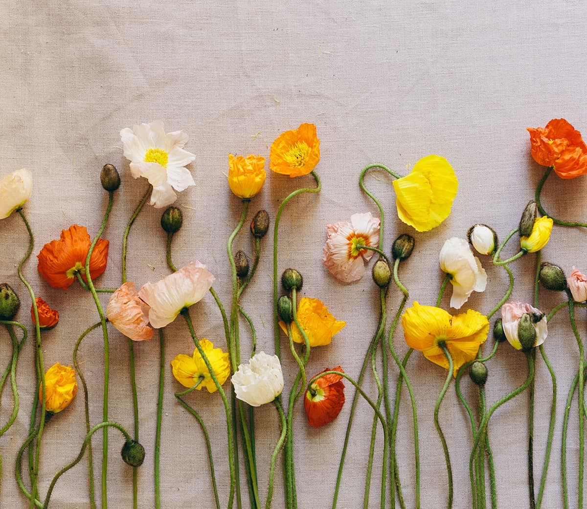 Poppies on a Linen Cloth