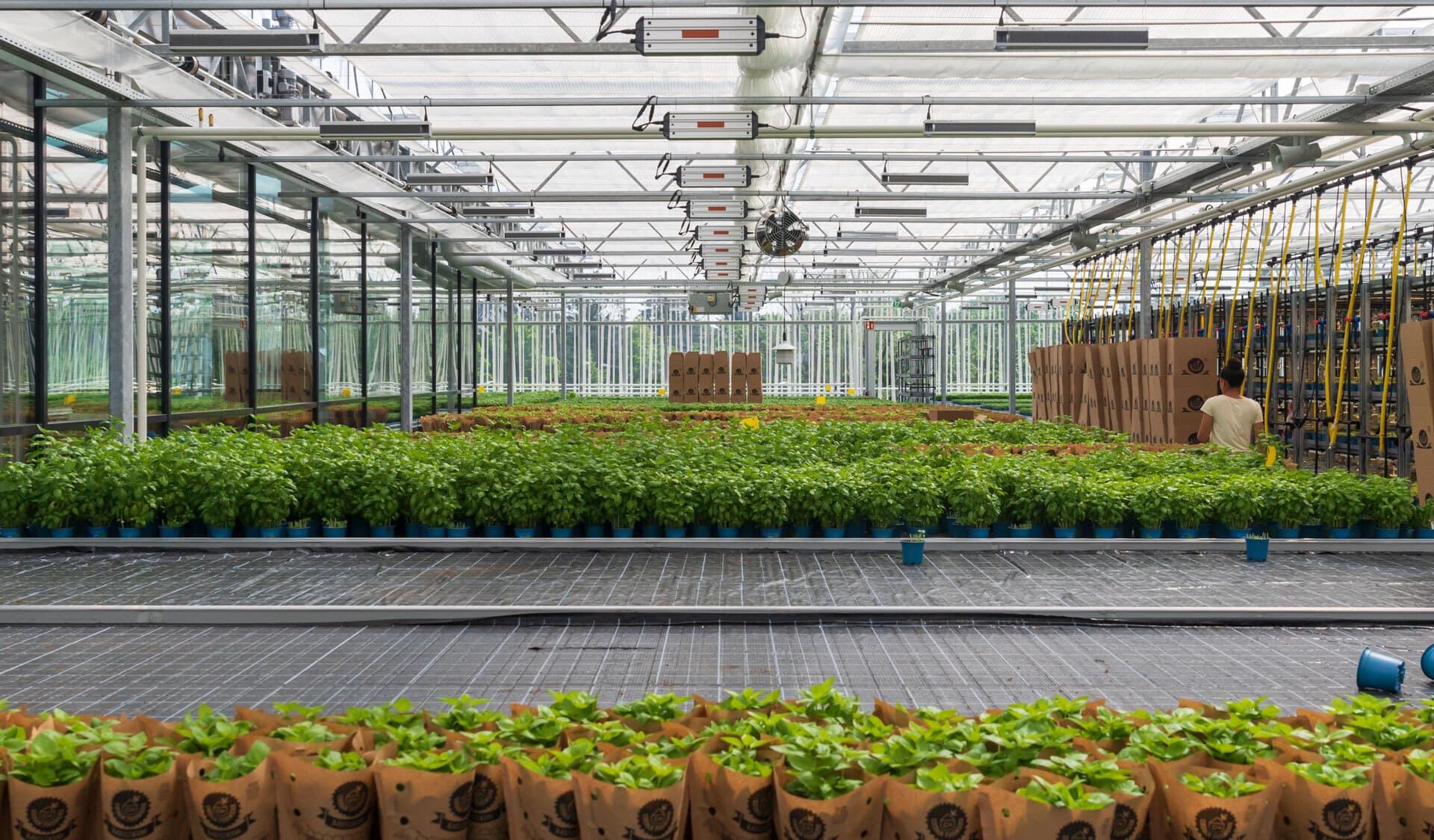 Rewe Green Farming-Markt