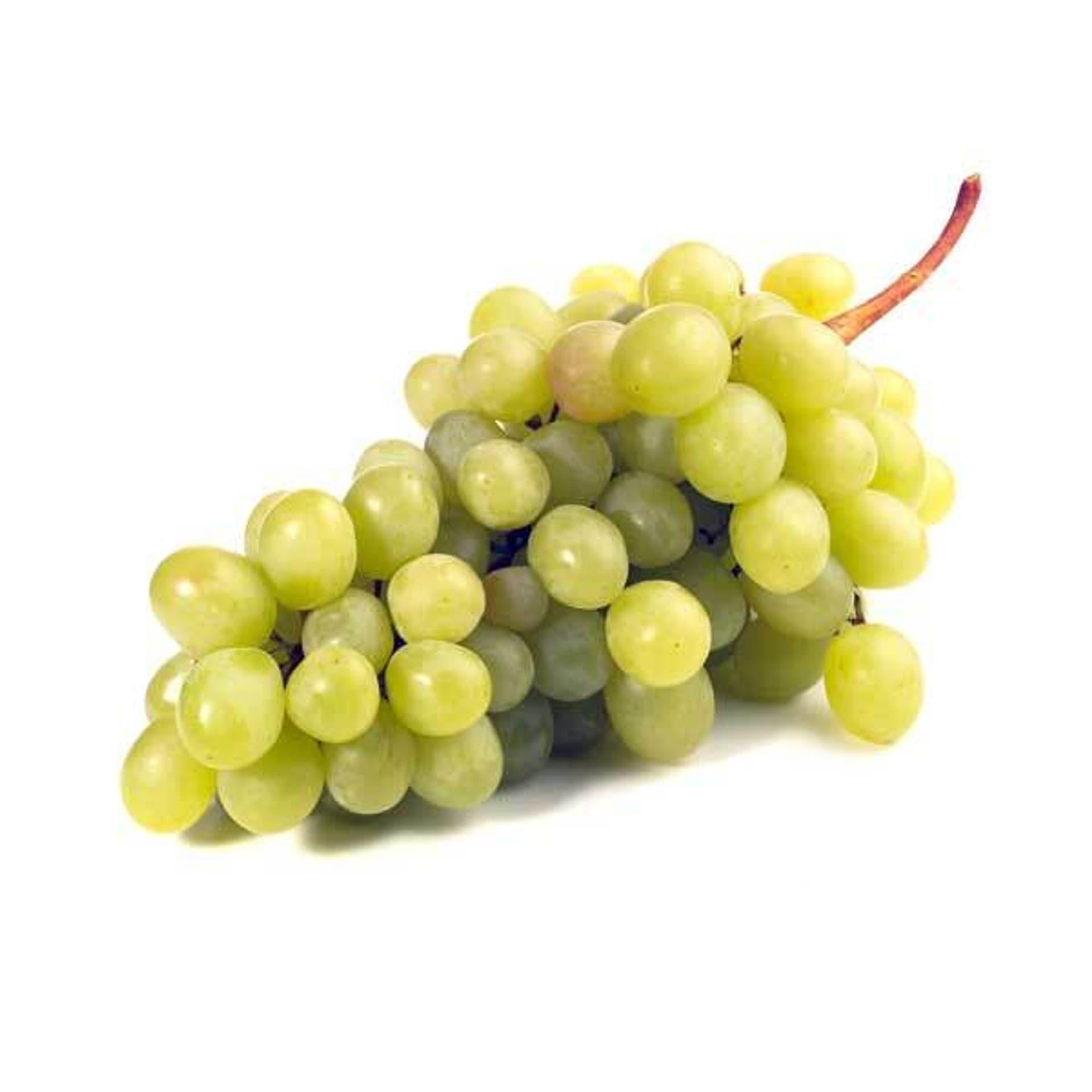 Weintraube Fanny