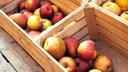 Rotbäckige Äpfel in Holzkisten