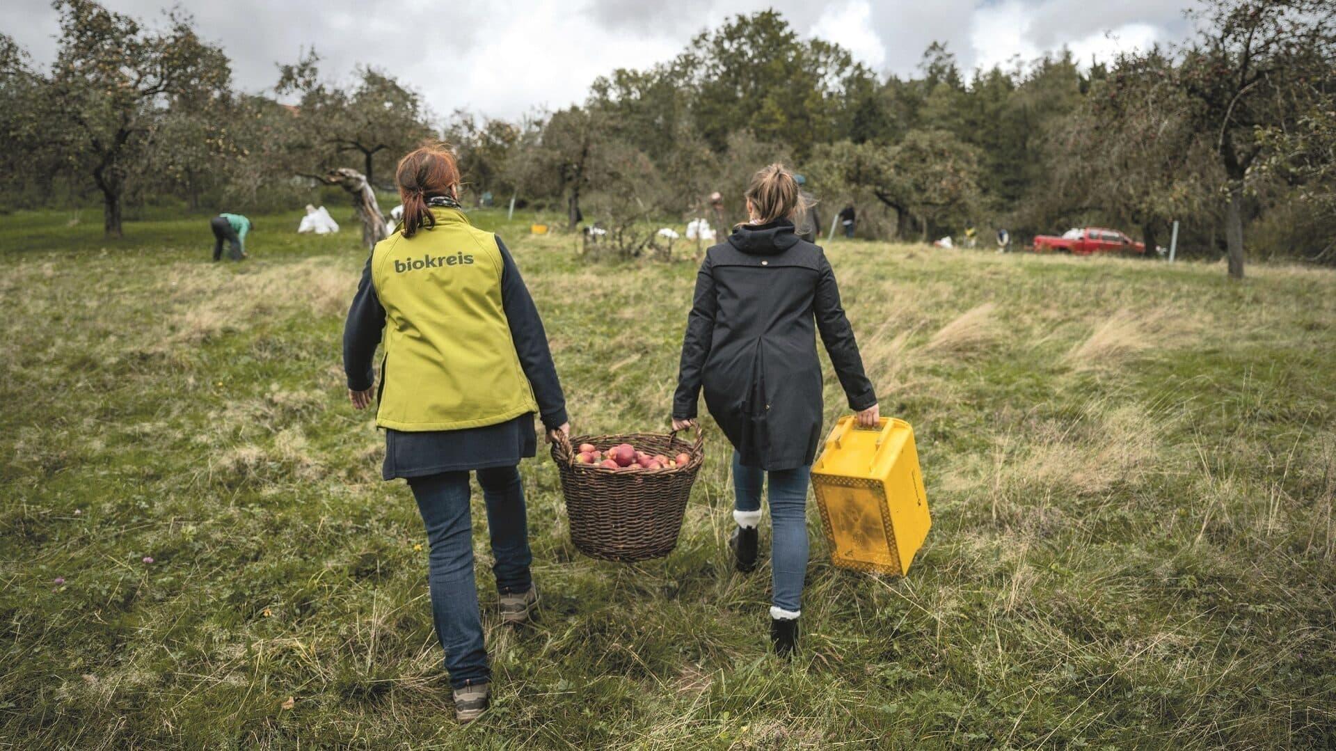 Zwei Frauen tragen einen Korb mit Äpfeln über eine Wiese.