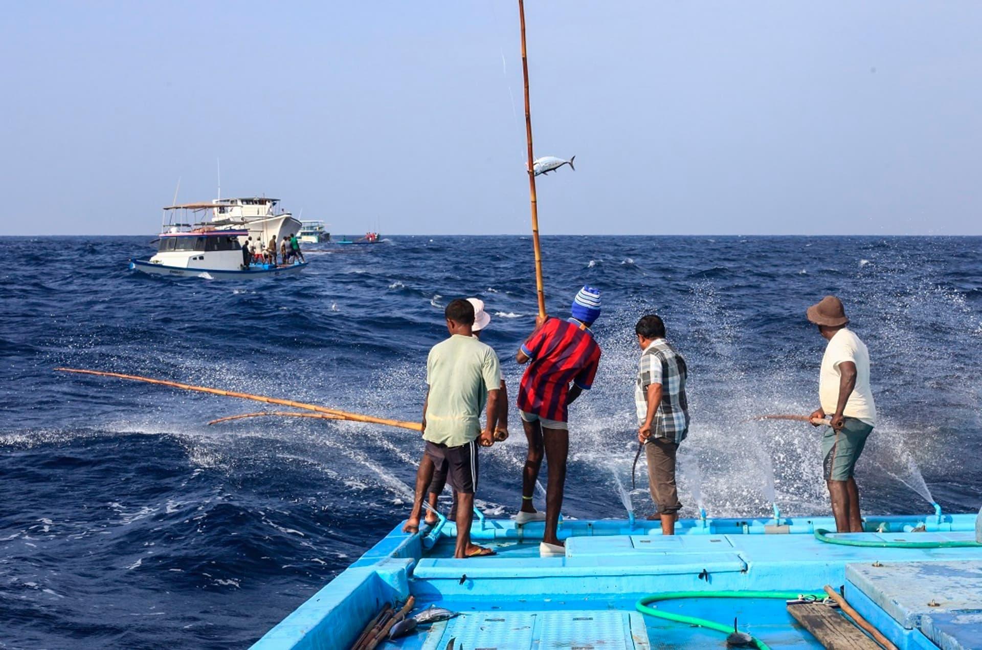 Fischer für Edeka
