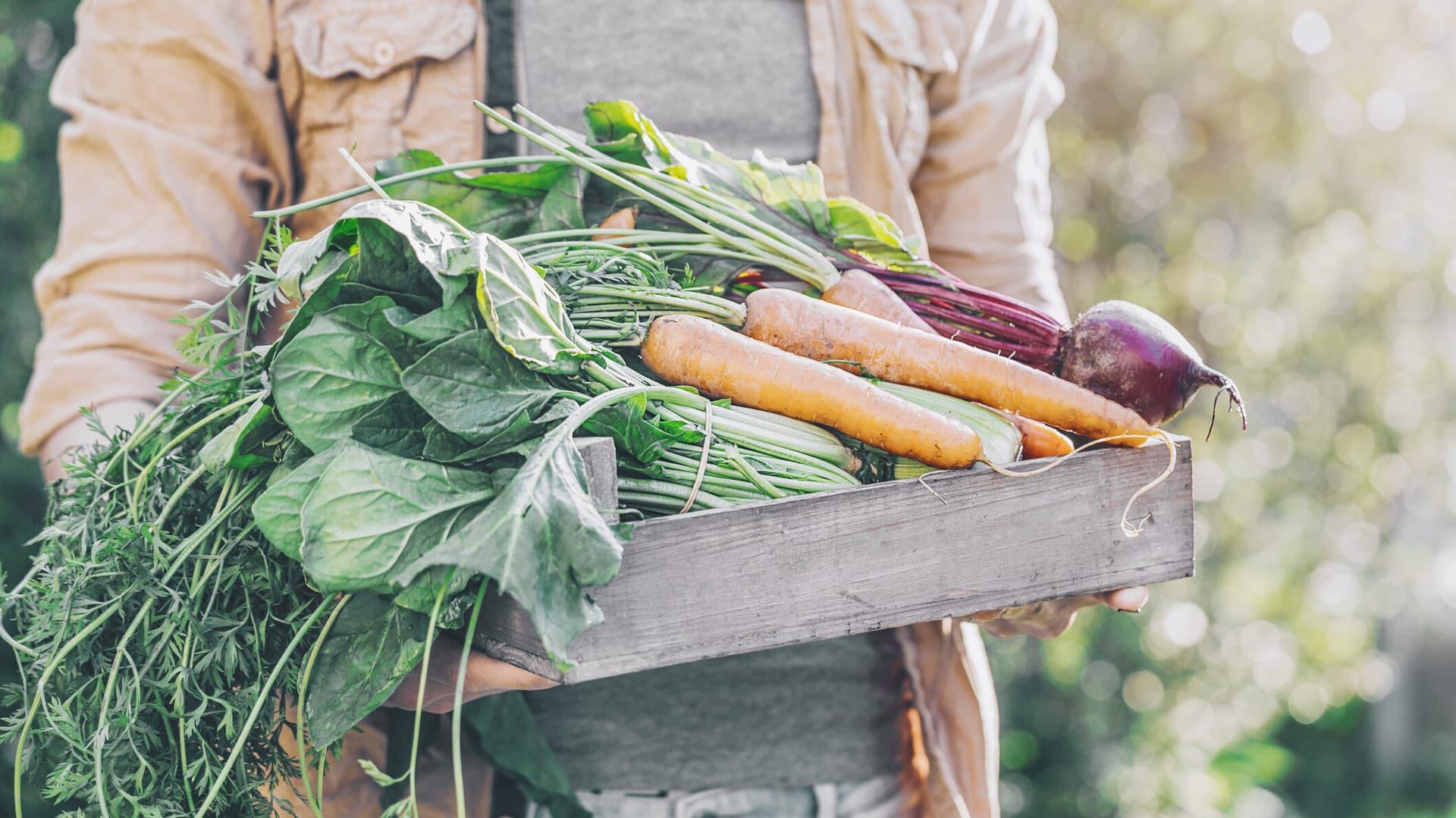 Eine Person trägt eine Kiste mit verschiedenem Gemüse.