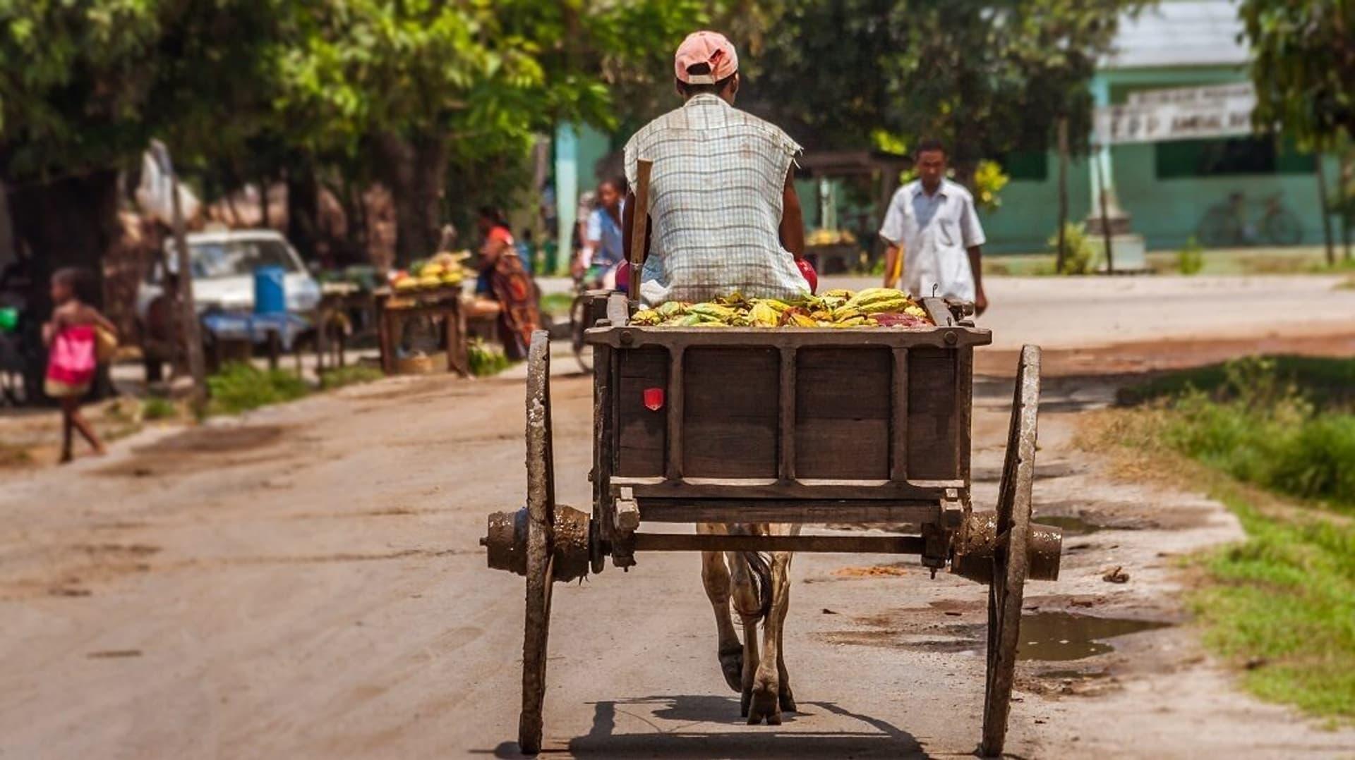 Kakaobauer auf Karren