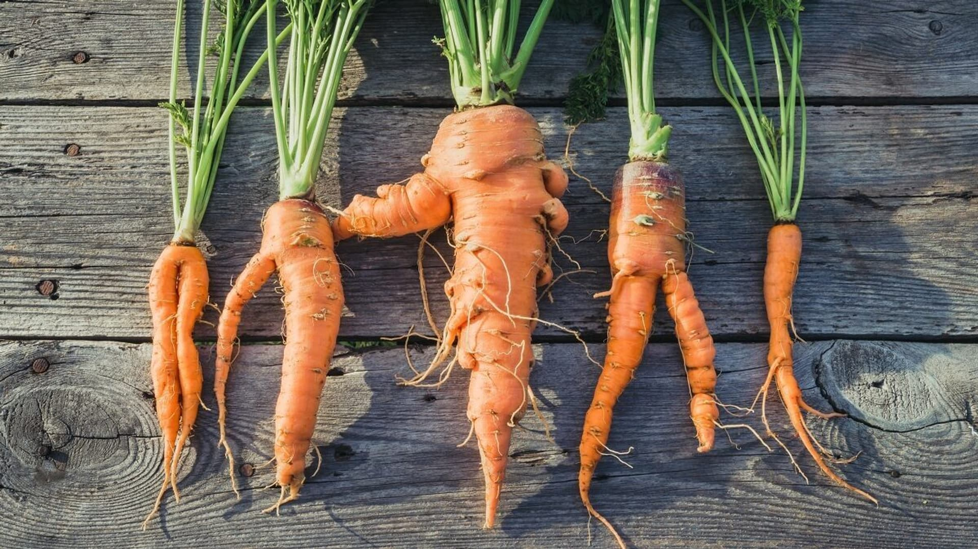 Karotten, Möhren