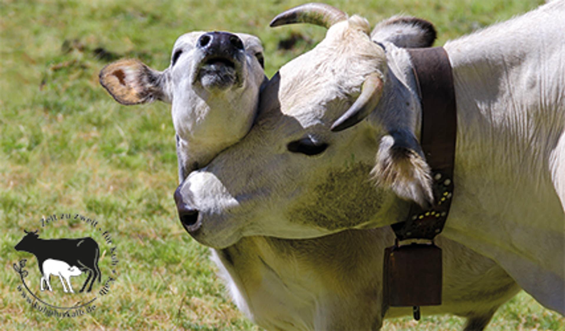 Kuh mit Kalb auf einer Wiese