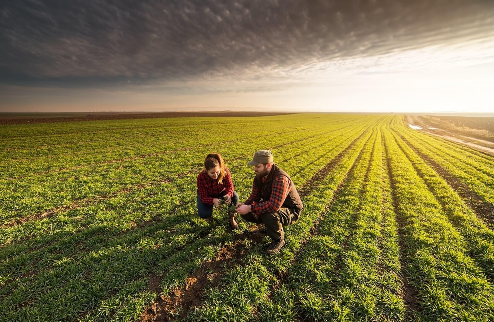 Große Schläge, kleine Einkommen, kaputte Umwelt: Konventionelle Landwirtschaft vor dem Aus?