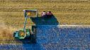 Landmaschine mäht auf einem Feld.