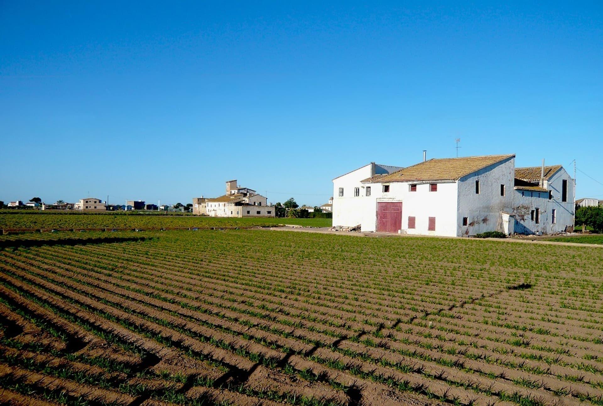 Erdmandel-Beete in Spanien. Schützt die neue Norm vor Überdüngung im Bio-Anbau?