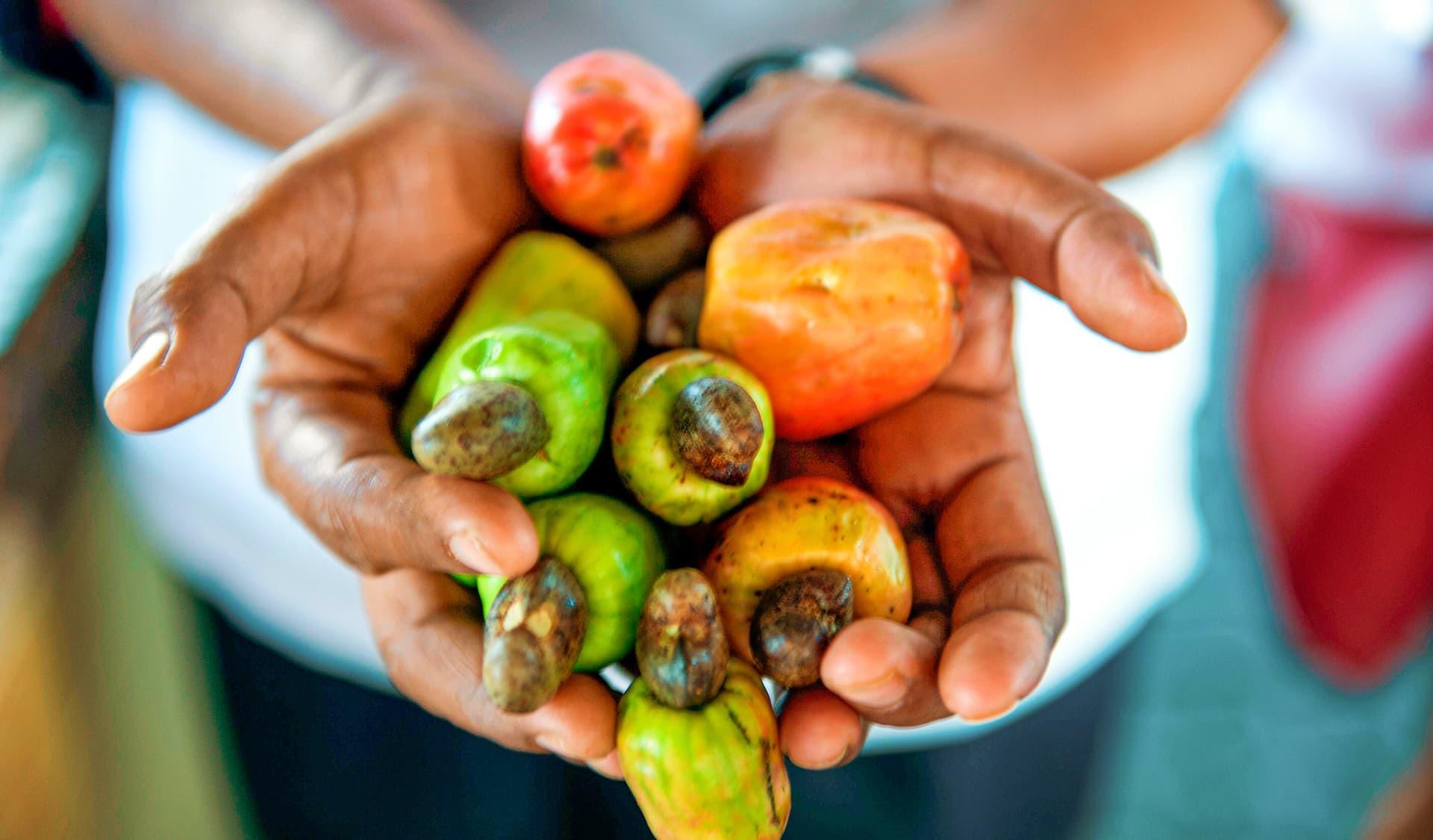 Cashewäpfel mit Cashewkernen