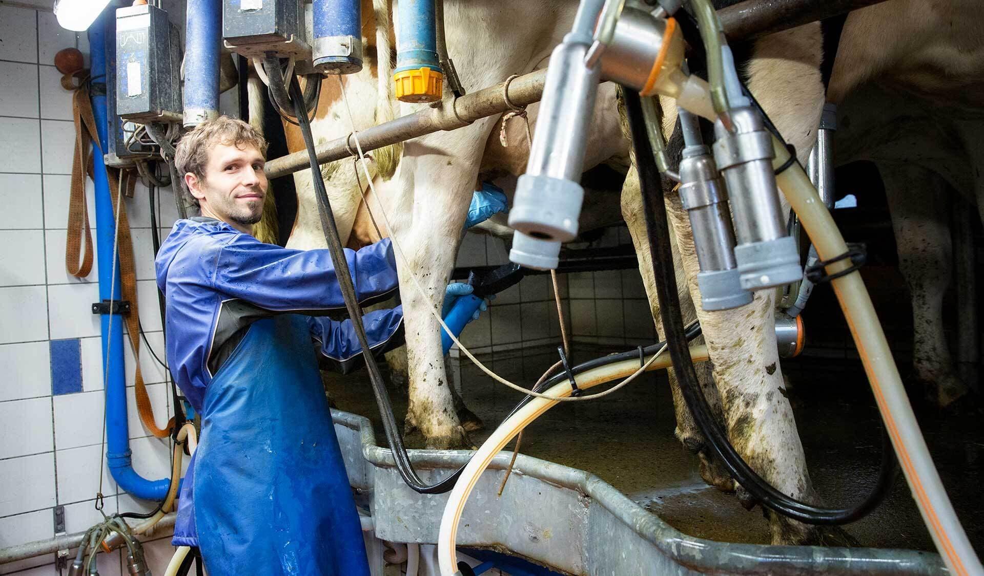 Falk Teschemacher beim Melken
