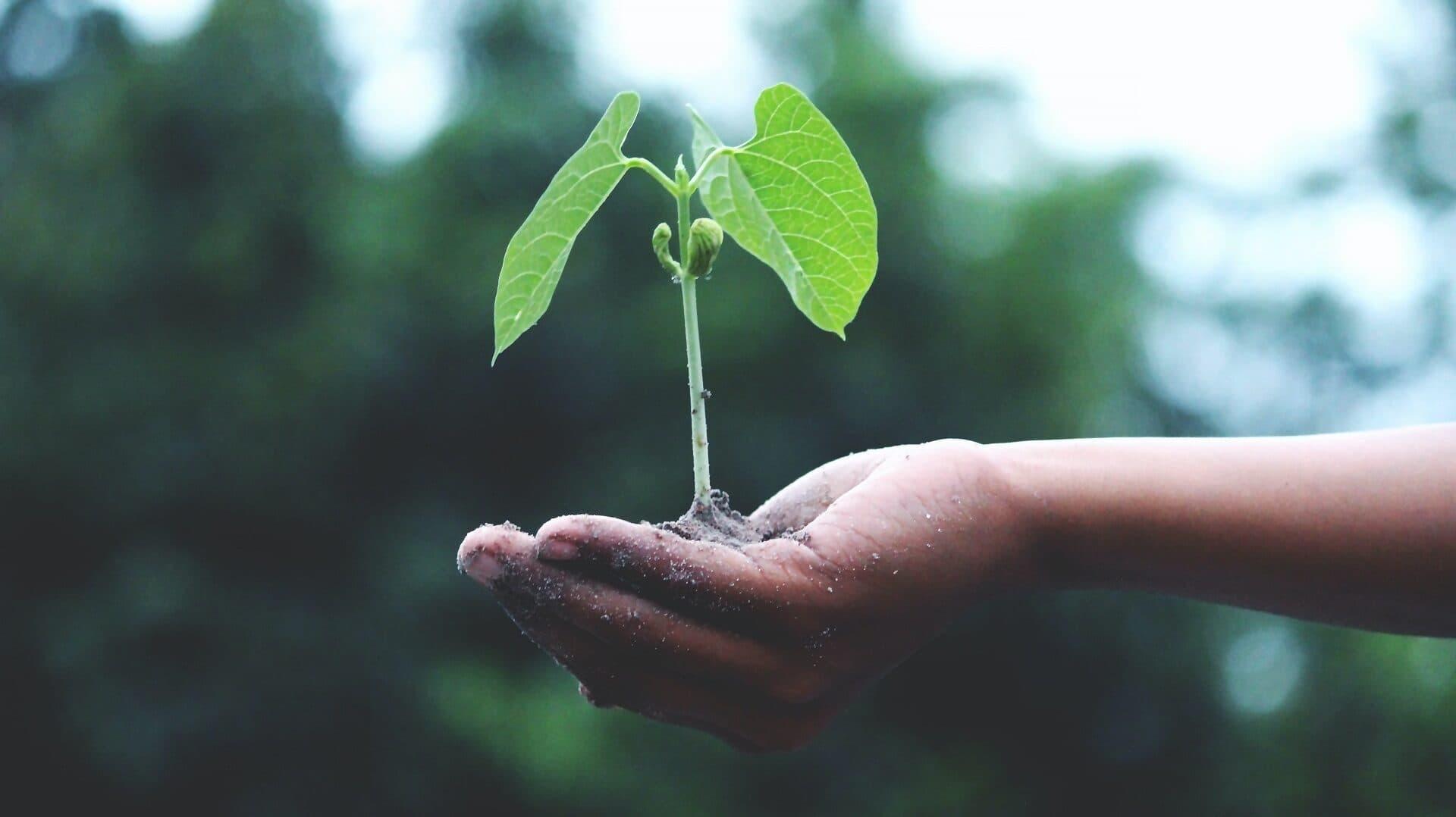 Hand hält junge Pflanze