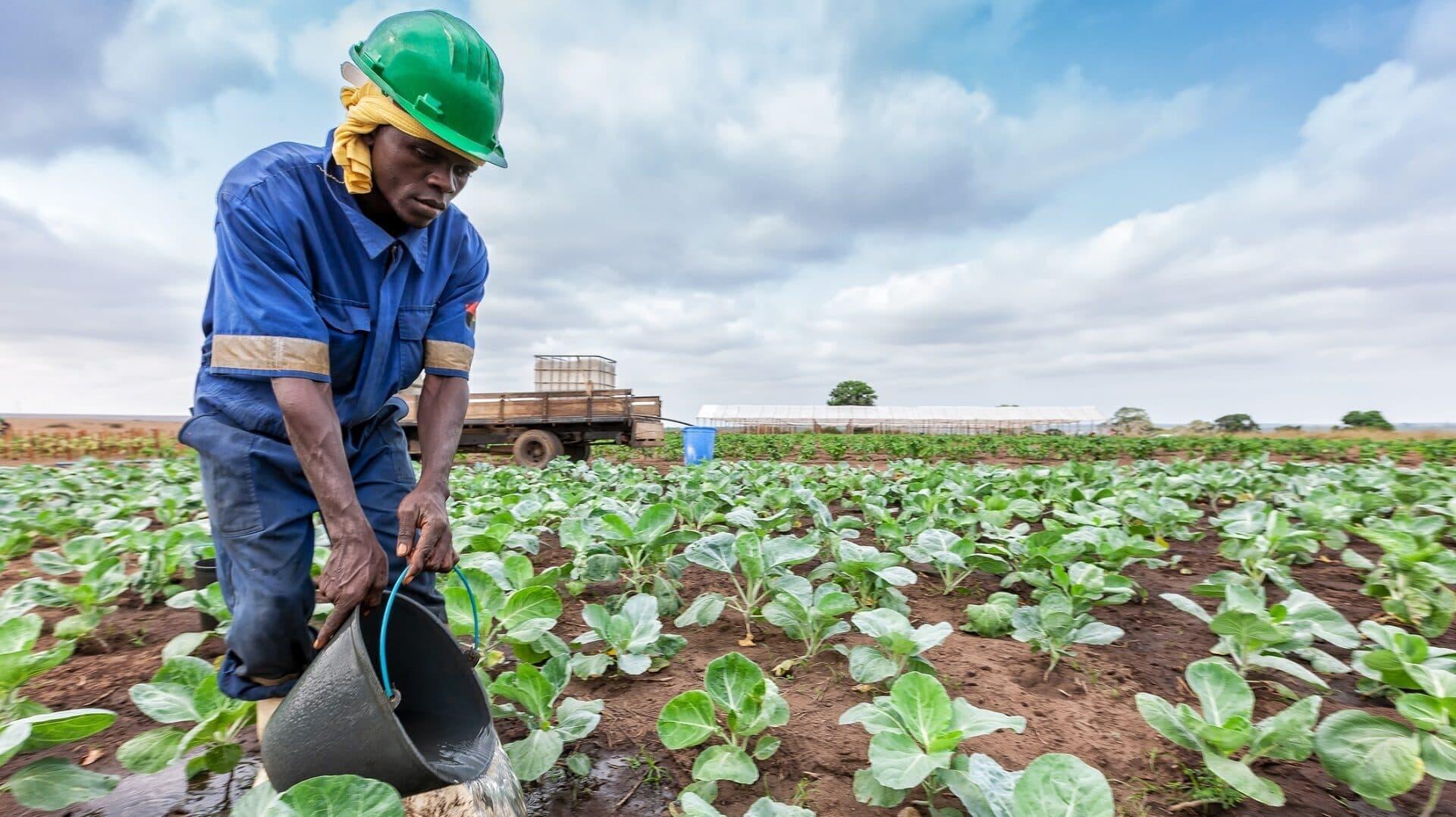 Bauer, Landwirt, Farmer, Afrika