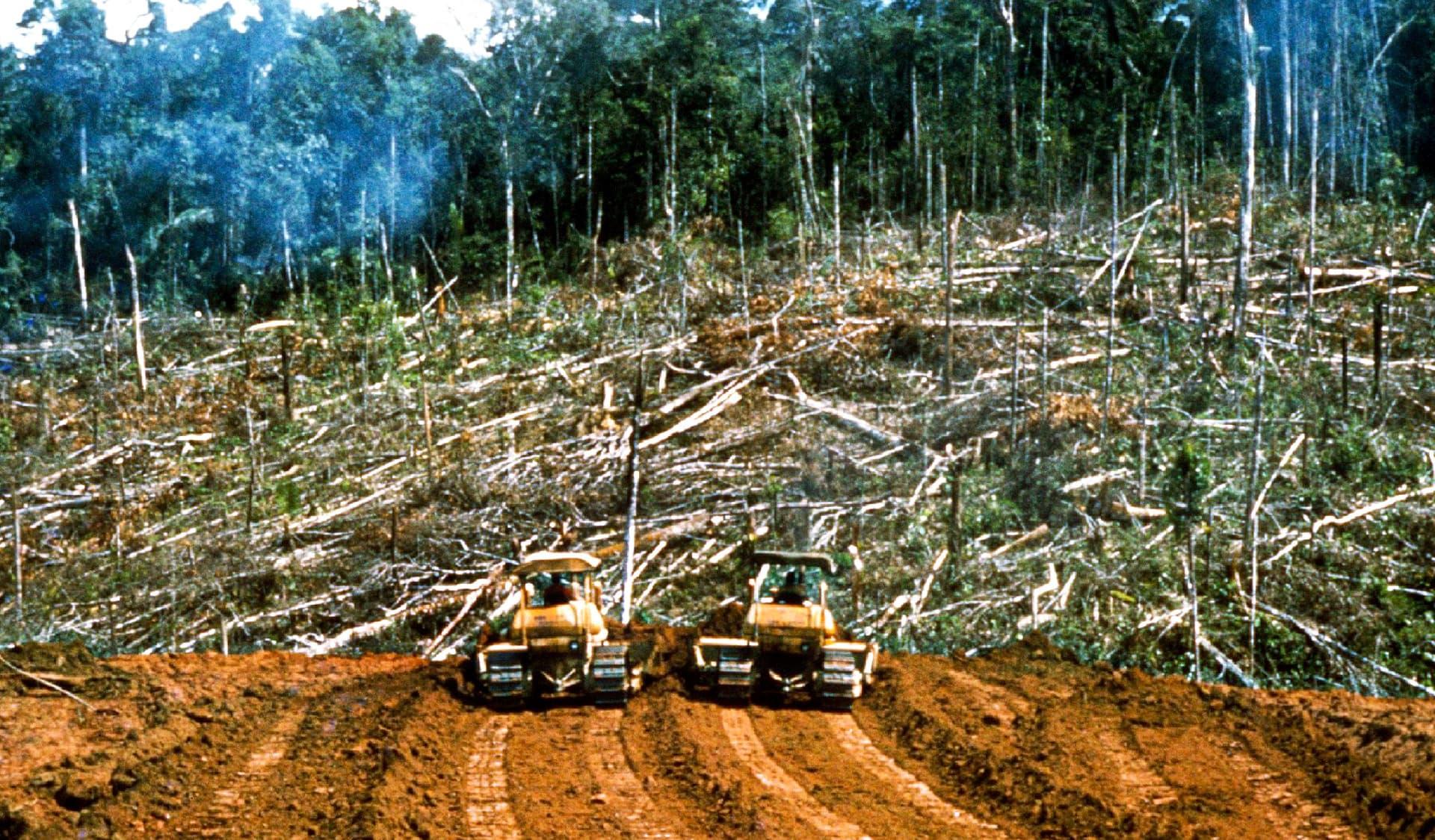 Zwei Bulldozer stehem am Waldrand vor gefällten Bäumen.
