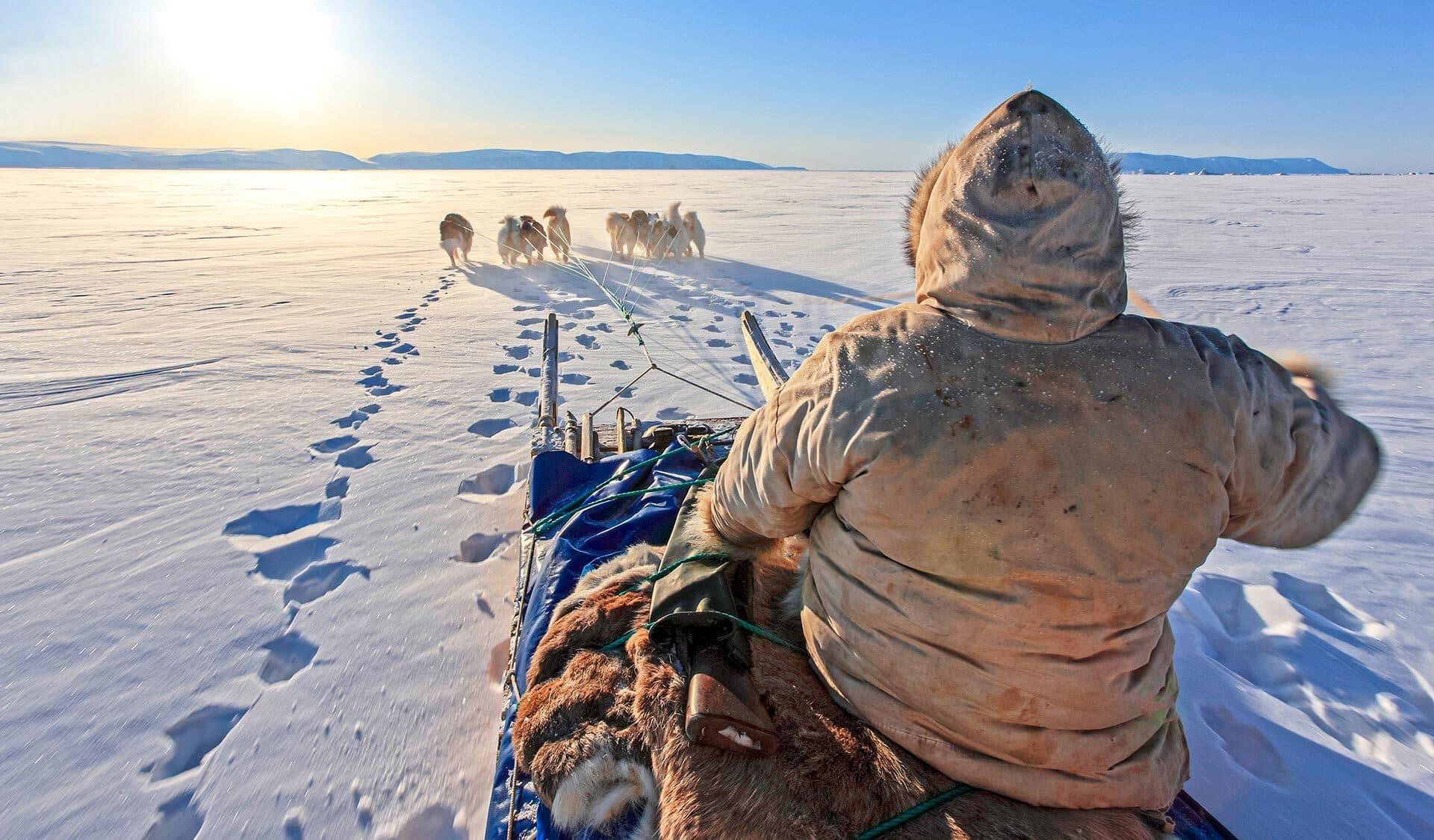 Hundeschlitten fahren in der Arktis