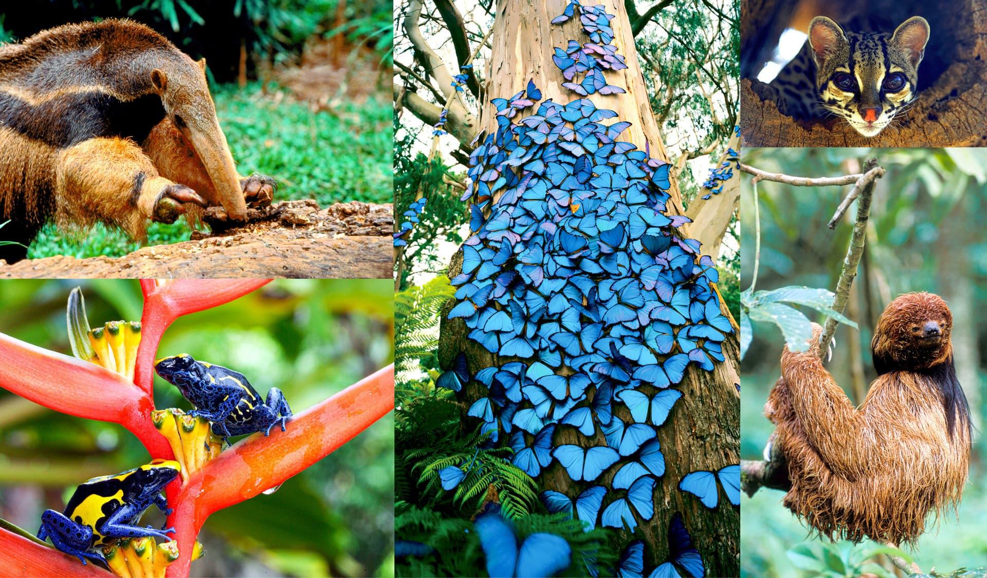 Collage mit Ameisenbär, Schmetterlingen, Ozelot und Faultier