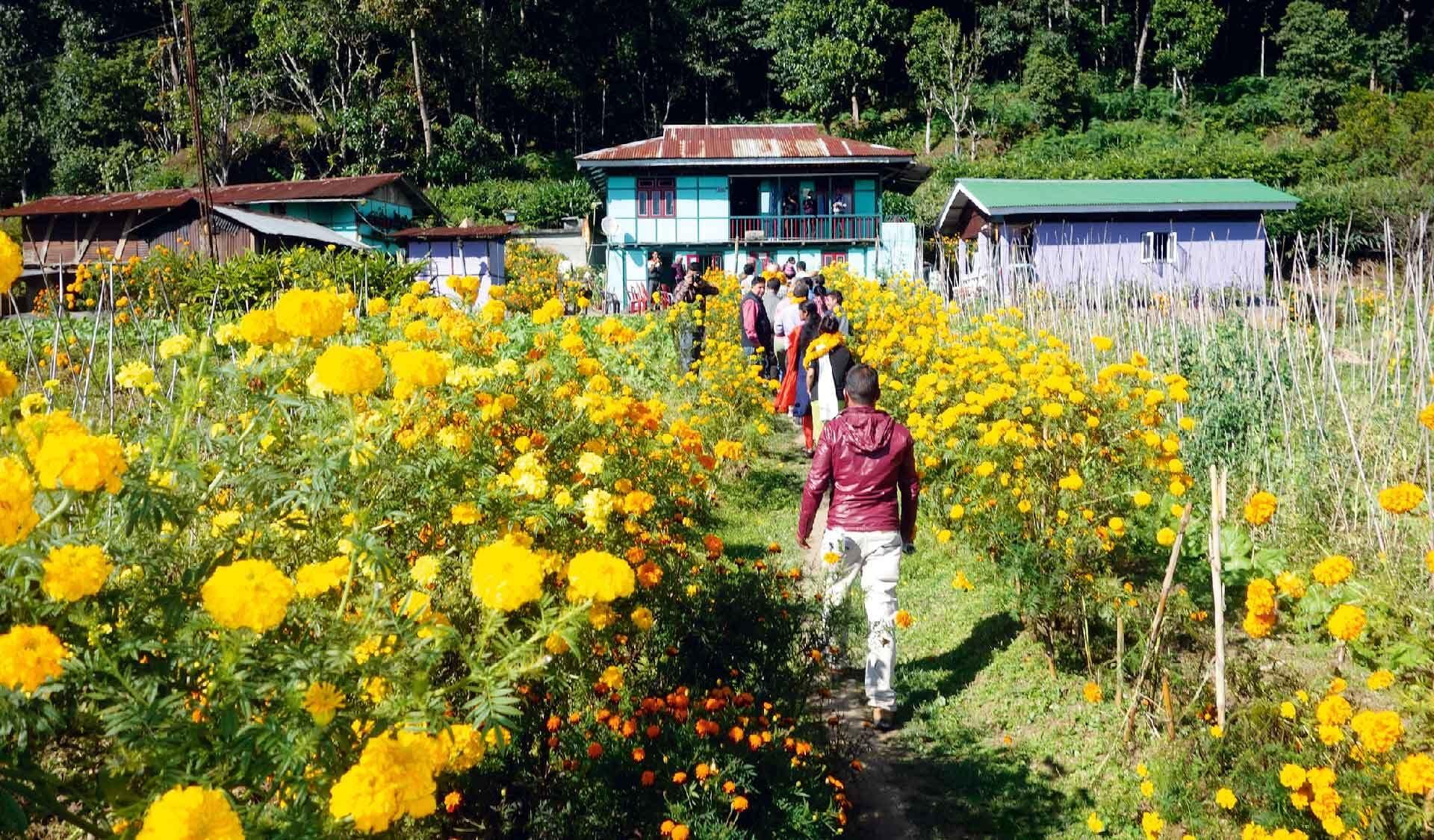 Menschen laufen durch ein Feld gelb blühender Blumen