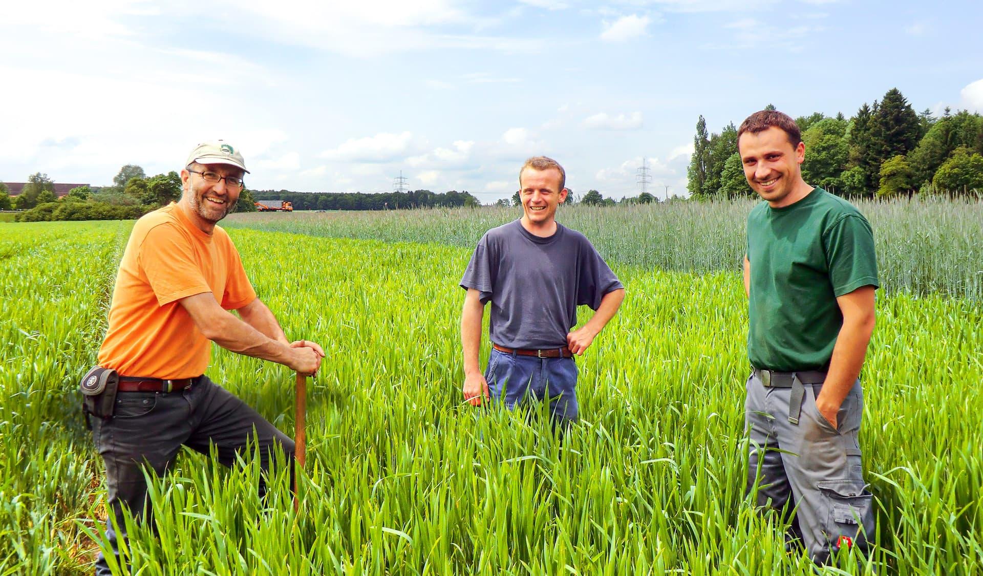 Drei Männer stehen in einem Getreidefeld