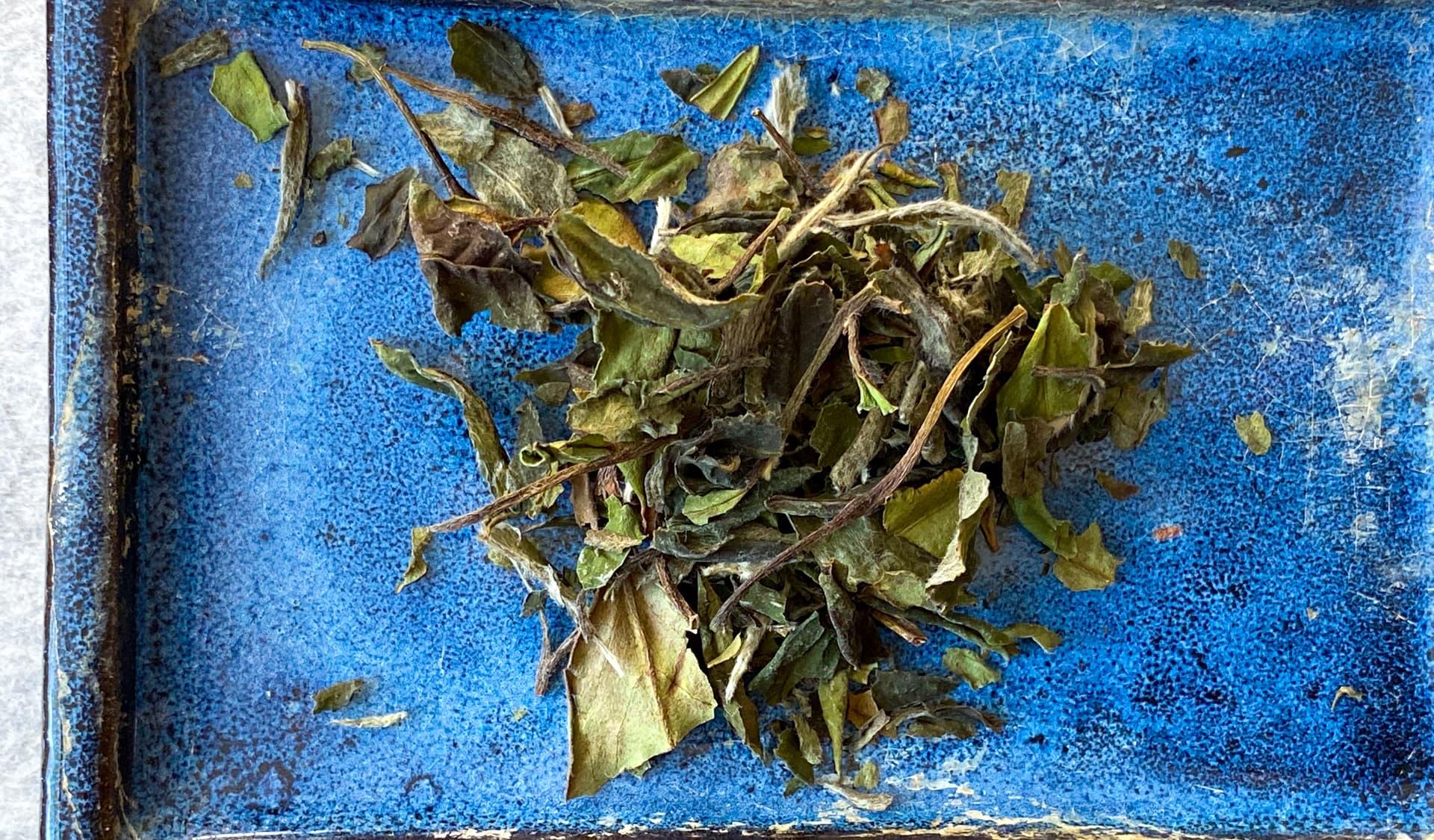 Lose weiße Teeblätter auf blauem Hintergrund